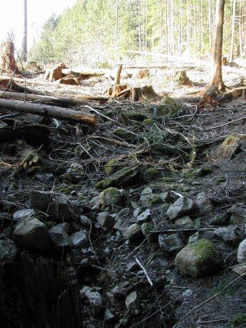 Stumps in a seasonal streambed - Gorge Harbour Rd