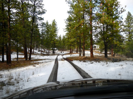 Our new driveway through the lodgepole pines.  Mule deer and coyotes are our neighbours.